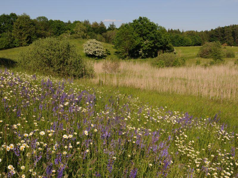 Volksbegehren Artenvielfalt: Kulturlandschaft mit Blumenwiese