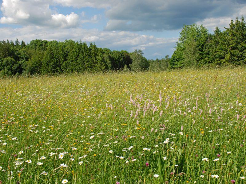 Volksbegehren Artenvielfalt: Blumenwiese und Wald